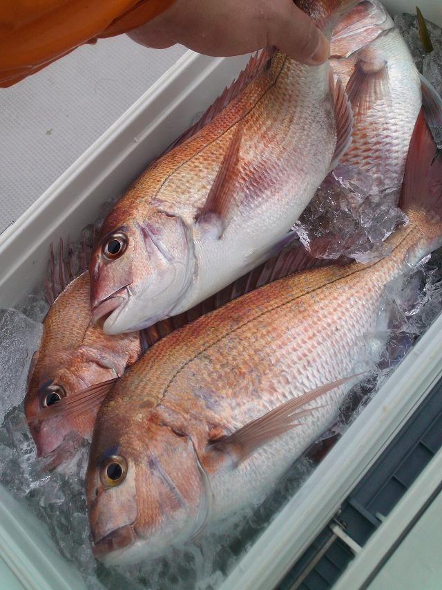 20140305新潟名立港 鯛釣り (25)
