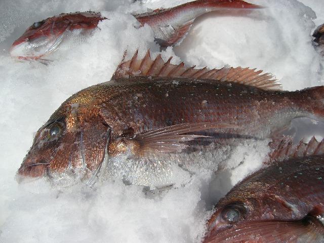 20140306魚のシンクロ (6)