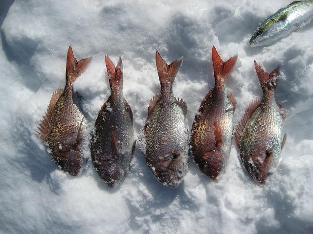 20140306魚のシンクロ (9)