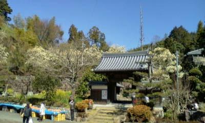 20140322モクレンのお寺 (4)