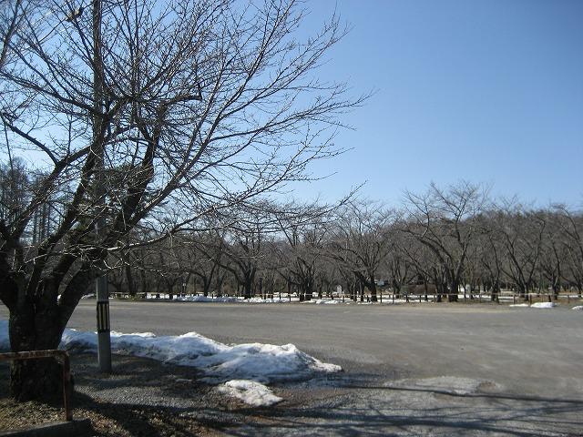 20140327蓼科湖のさくら (6)