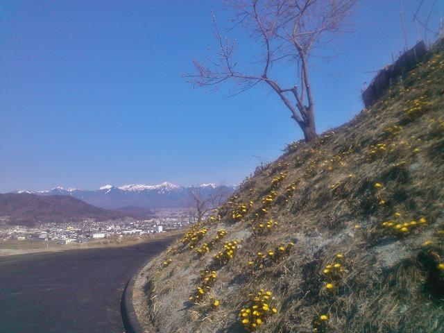 20140401大熊神社福寿草 (3)