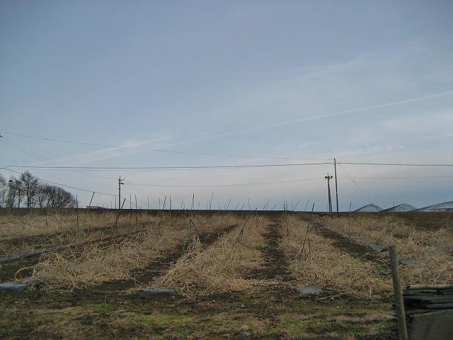 20140331バディアス農園 (3)