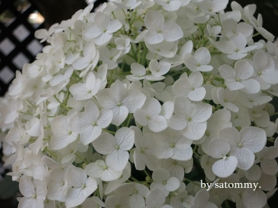 IMG_4059_小
