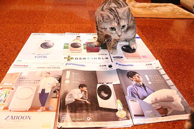 blog_0003412.jpg