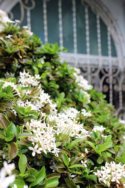 タイの花05