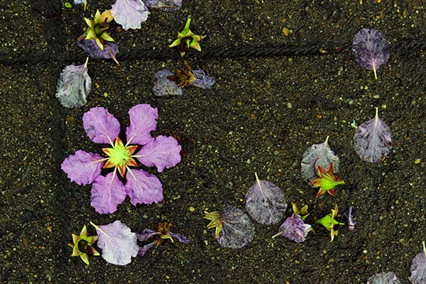 タイの花06