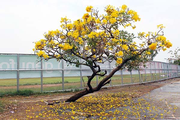 タイの花12