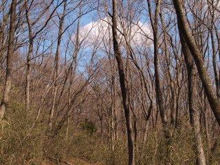 s09青空と雲と木