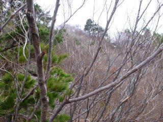 s03藪藪の急坂3