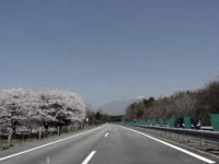 sakuranorosutaimu2.jpg