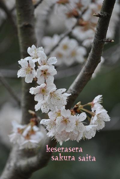 21寺が池DSC_0522