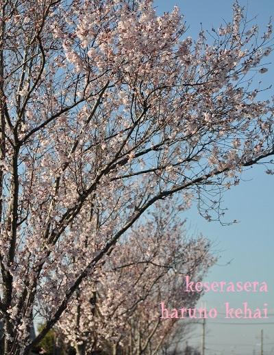 22狭山DSC_0529