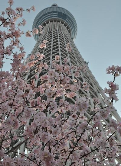 1東京DSC_0919
