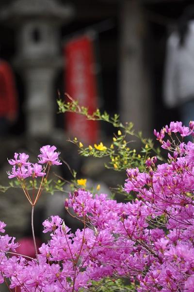 13桜DSC_0322