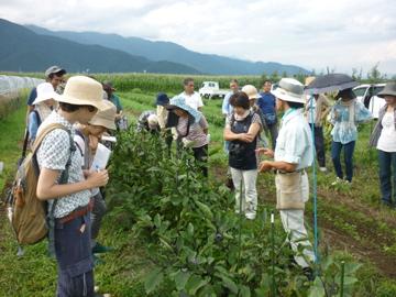 自然農開発センター1