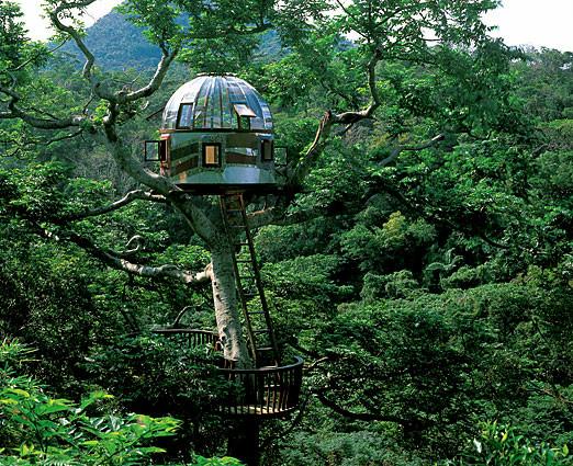 tree-house-1.jpg