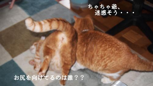 2014-03-27-14-26-17_photo_20140330210327db0.jpg