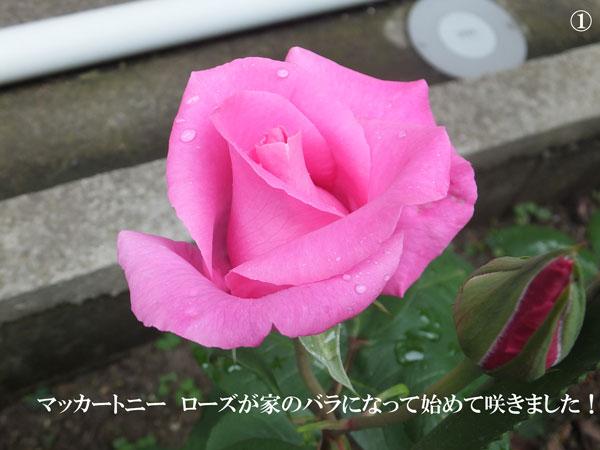 ポールの花
