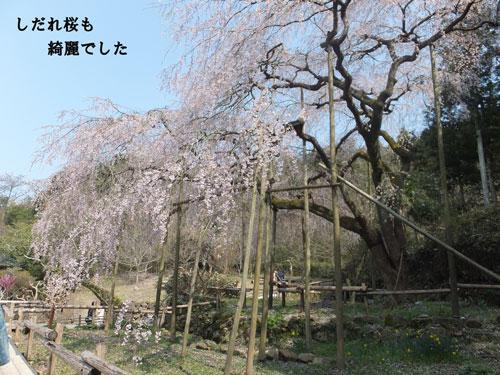 DSCF2461.jpg