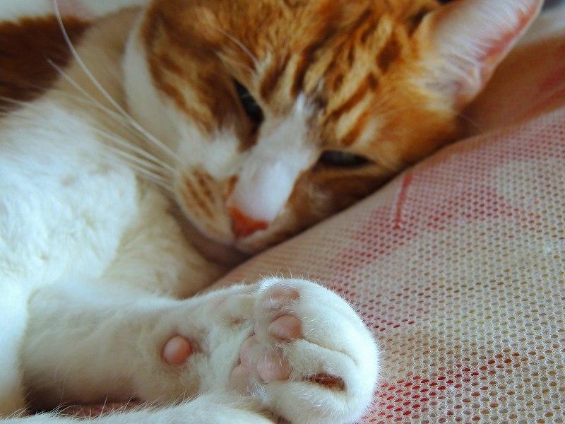 寝子=猫2