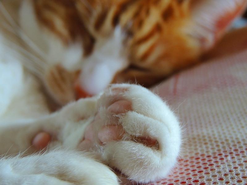 寝子=猫1