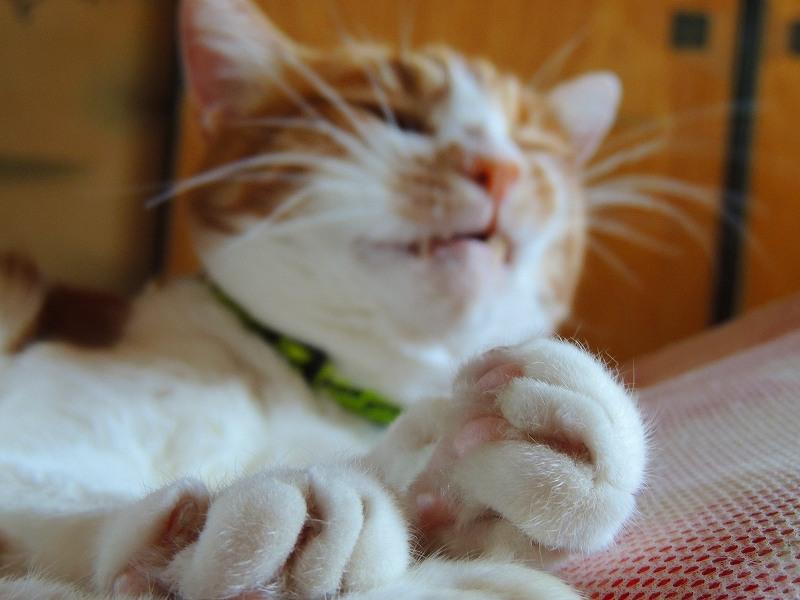 寝子=猫4