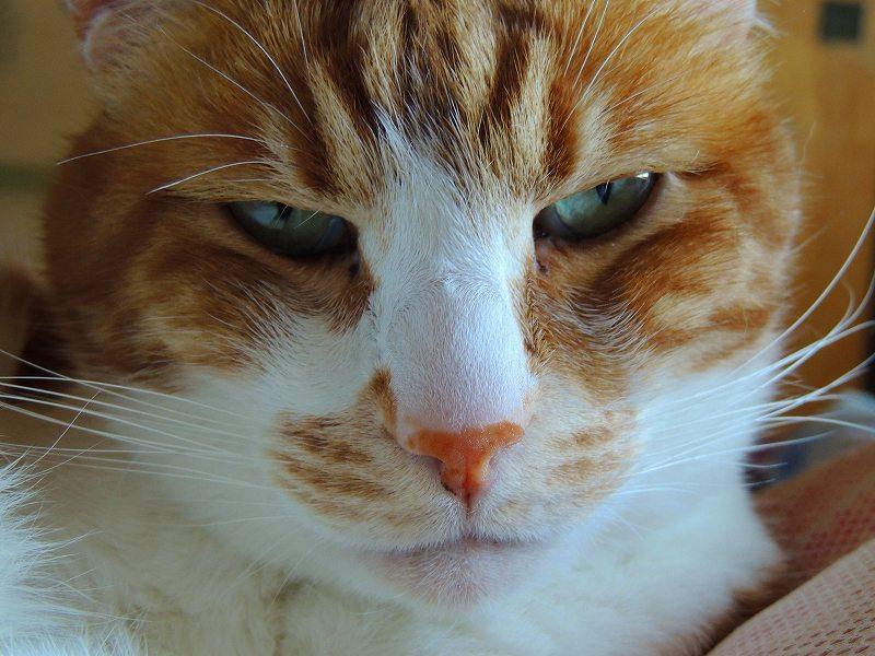 寝子=猫5