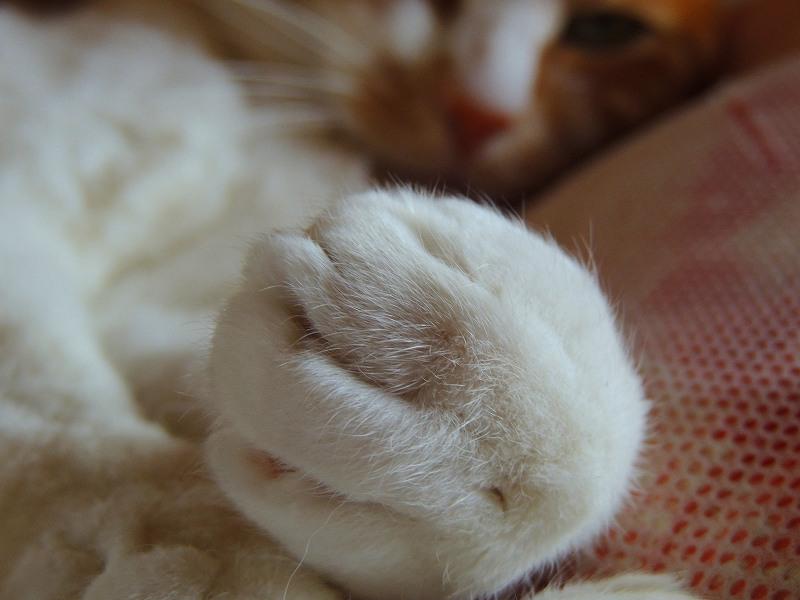 寝子=猫6