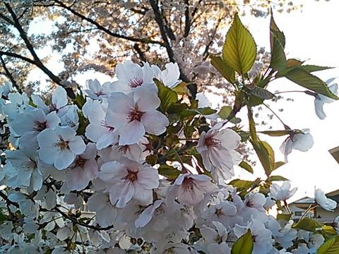 fc2_2014-04-26_10-36-33-639.jpg