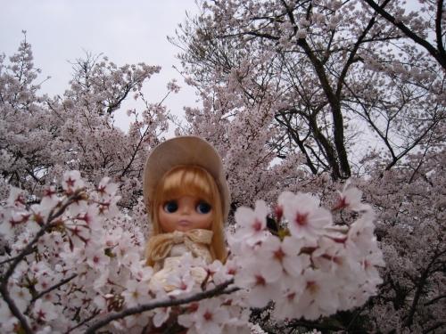 この桜がすきなんです
