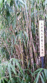 歳三お手植え竹