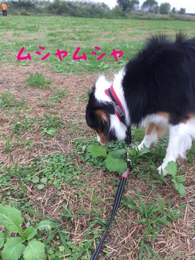 fc2blog_2014101217074057c.jpg