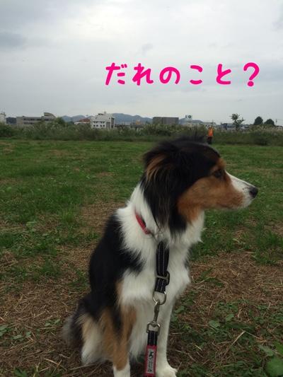 fc2blog_20141012170806a6e.jpg