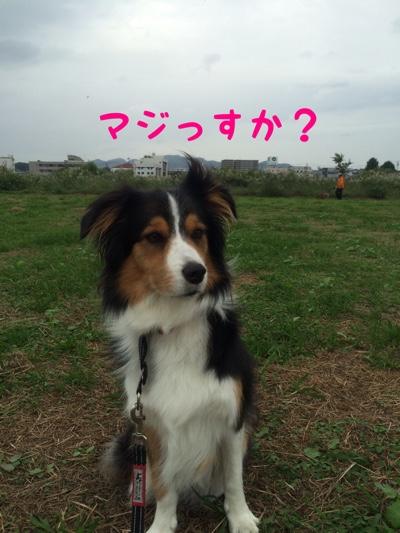 fc2blog_2014101219430171a.jpg