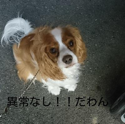 LINEcamera_share_2014-08-10-20-57-50.jpg