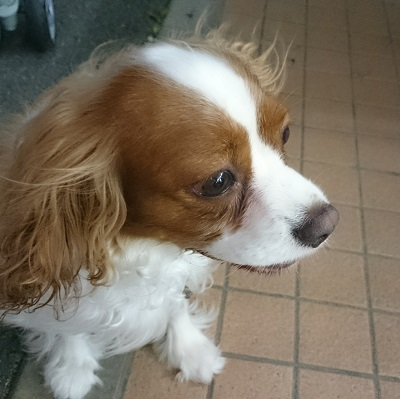 LINEcamera_share_2014-08-10-20-58-48.jpg