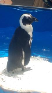 penguin - コピー