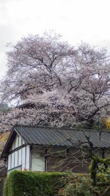 20140330_桜守_WG3GPS (10 - 14)