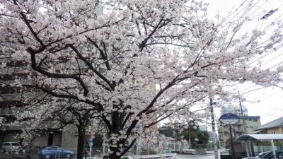 20140330_桜守_WG3GPS (14 - 14)