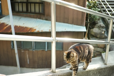20140403_Onomichi_DP2Merrill-4_2014042322332296d.jpg