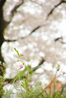 20140403_Onomichi_DP2Merrill-4_20140501222458ab2.jpg