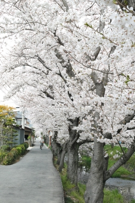 20140403_Onomichi_DP2Merrill-6.jpg