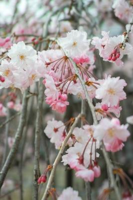 20140403_Onomichi_DP2Merrill-7_20140417230451c1e.jpg