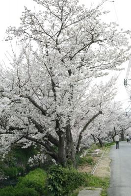 20140403_Onomichi_DP2Merrill-7.jpg