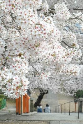 20140403_Onomichi_DP2Merrill-9.jpg