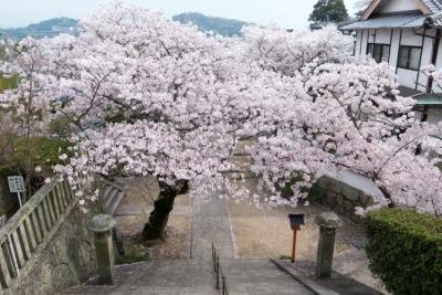 20140403_Onomichi_GRD4-3.jpg