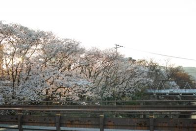 20140401_桜守_DP2Merrill-9
