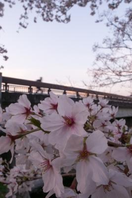 20140401_桜守_GRD4-10