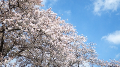 20140331_j吉香公園にて_WG3GPS (3 - 5)